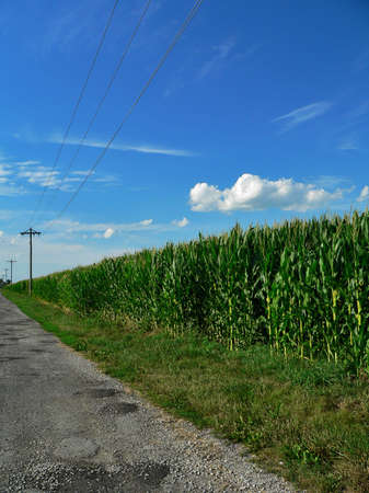 Endless Corn Field Along Country Road Stock Photo