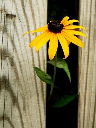 timid: Single Timid Orange Daisy Stock Photo