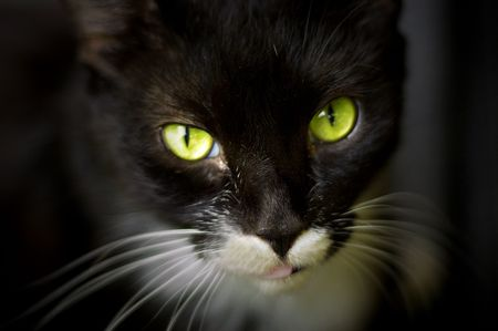 mysterious, green cat eyes