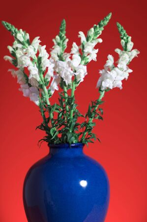 Snapdragon Bouquet in Blue Vase against Dramatic Red Background photo