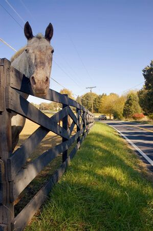 Horse Peering Over Wooden Fence photo