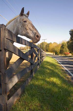 peering: Horse Peering Over Wooden Fence Stock Photo