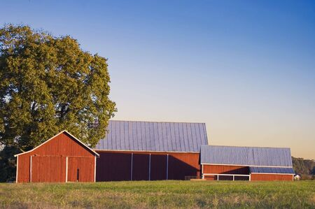 Red Barn, Pasture, and Tree Stock Photo - 366017