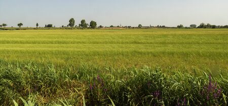 Rural landscape in West Flanders, Belgium near Beveringe with a windmill