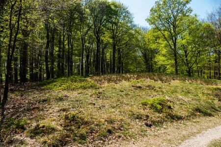 Monument grave (tumulus) in the forest near Putten, Netherlands