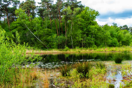 Landscape with pond in the forest near Almelo, Netherlands