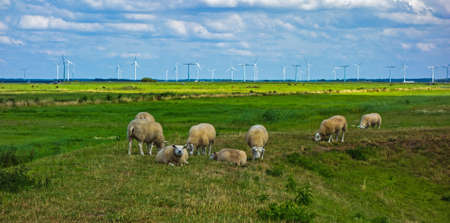Panoramic view of a meadow with sheep and windmills near Eemnes, Netherlands Stockfoto