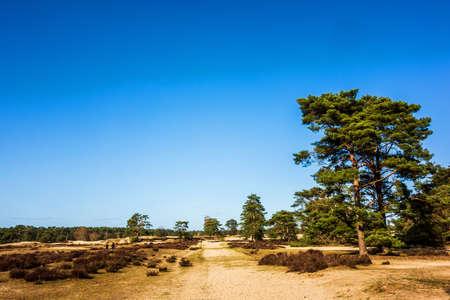Landscape at Soestenuinen near Amersfoort, Netherlands