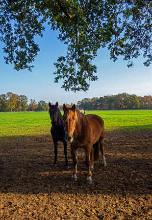 Group of horses in a meadow 免版税图像