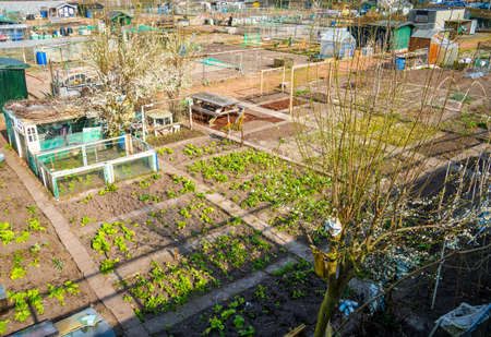 Panoramic view of allotment gardens in the city