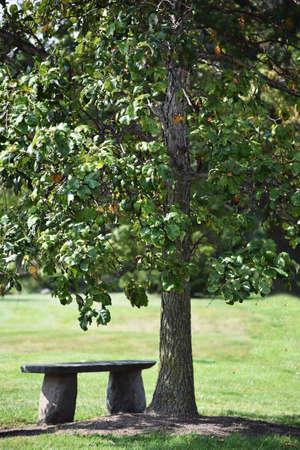 木の下のベンチ