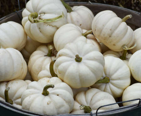 Haloween Gourds