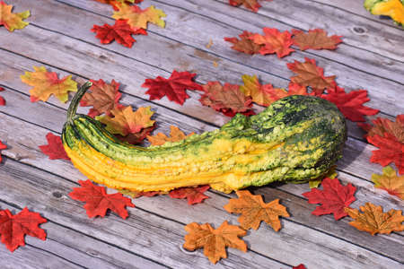 Halloween Gourd with Leaves Stock Photo