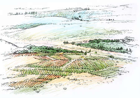 landscape with vineyard Stock Photo