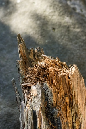broken wood photo