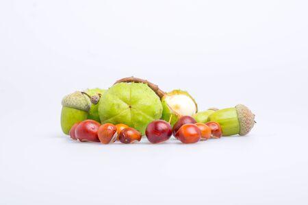 splitting up: autumn chestnuts  Stock Photo