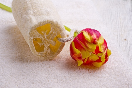 towel and tulip photo