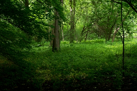 beautiful forest floor, forest clearing