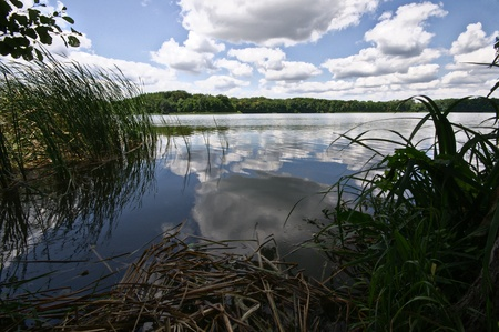 Forest lake under blue cloudy sky  Stock Photo