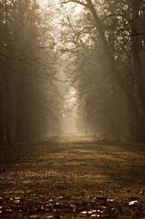 autumn alley in the park, foggy