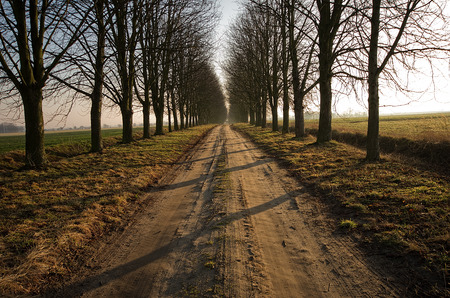 furrow: Empty dirt road, avenue trees, sunrise