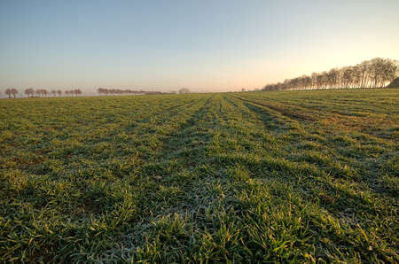 Spring, empty fields at sunrise