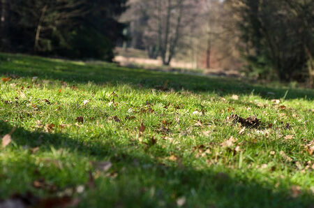 Early spring grass, the remains of autumn leaves in the background of a tree Stock Photo