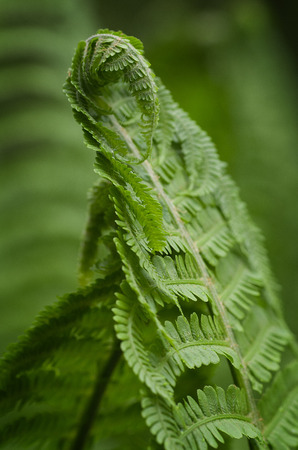 Photo of green fern growing in forest