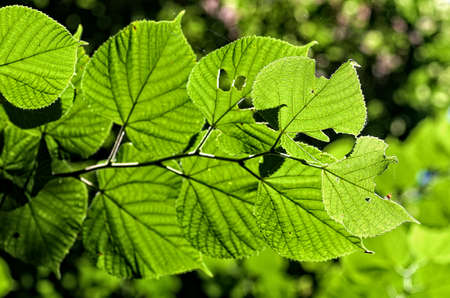 leaves on the green backgrounds