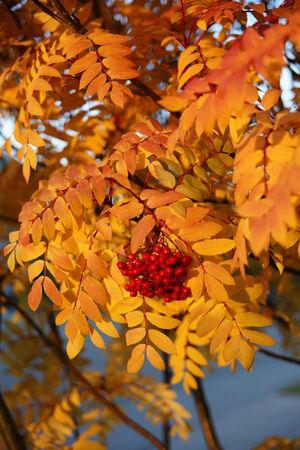 Golden Fall Imagens