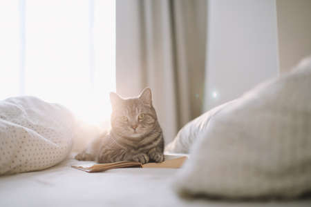 funny cat sleeping on the blanket in bed