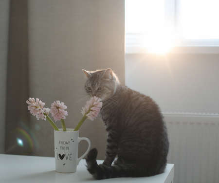 Cute cat and vase with flowers on the table. Lovely kitten posing with flowers in a cozy home interior Stock fotó