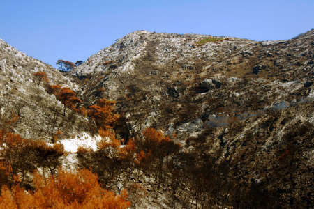 bushfire: hill after bushfire on Zakynthos island, Greece Stock Photo