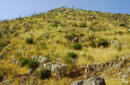 bushfire: hill afer bushfire on Zakynthos island, Greece Stock Photo