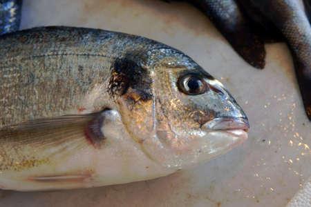 visboer: vissen in vishandelaar, Zakynthos, eiland in Griekenland