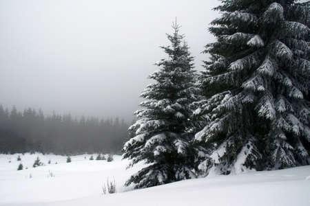 꼭대기가 눈으로 덮인: 대로 산, 폴란드 (Poland)에서 눈 덮인 스프 루
