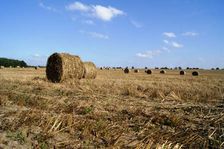 wielkopolska: stubble with straw in Wielkopolska, Poland Stock Photo