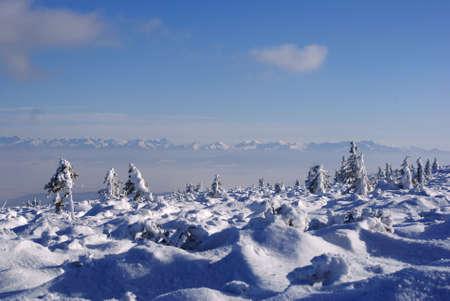 Carpathian mountains at winter