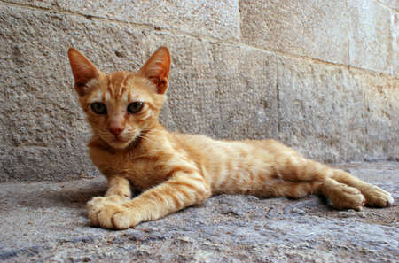 ginger cat in City of Rhodes, Greece Stock Photo - 16624618
