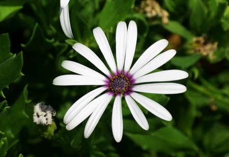 rhodes: flower gazania, Greece, Rhodes Stock Photo