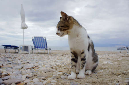 gray cat on the beach in Greece