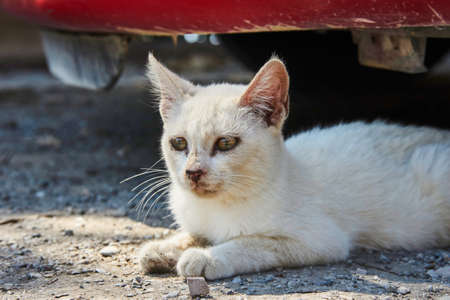 Portrait of a white cat on the Greek island of Rhodes