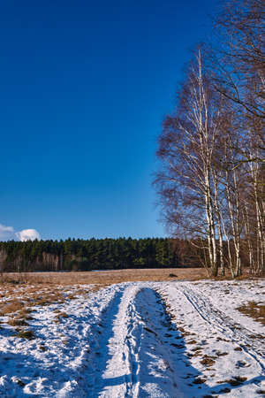 snowcovered: Snow-covered dirt road and birch in winter in Poland Stock Photo