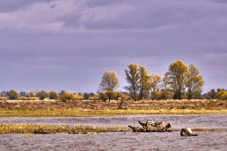 spillway: The trunk of a dead tree at a floodplain at the mouth of the River Warta in Poland