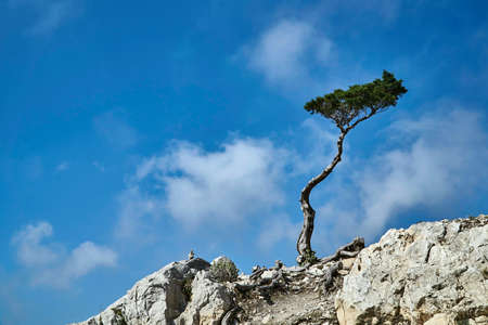 Single tree on a rock on a background of the sky on the island of Rhodes Stock Photo