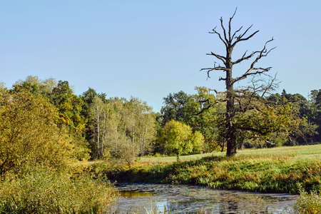 Dried oak over the river floodplain in Poland Фото со стока - 84469553