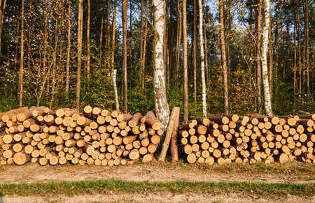 A pile of cut wood in autumn in a forest in Poland