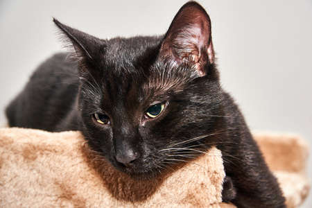 Portrait of a young European cat with black hair Stock Photo