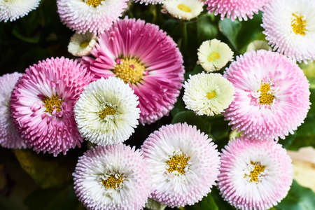 A bouquet of beautiful colorful daisy flowers