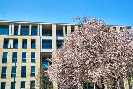 Spring trees and the facade of modern building in Poznan